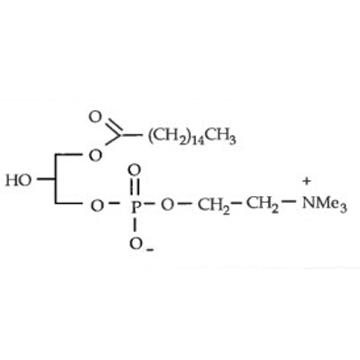 棕櫚酰溶血卵磷脂 P-LysoPC