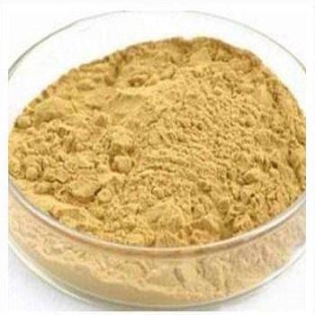 人参叶提取物 10% Panax Ginseng(Leaf)Extract Powder