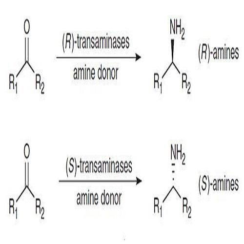 手性转氨酶催化应用