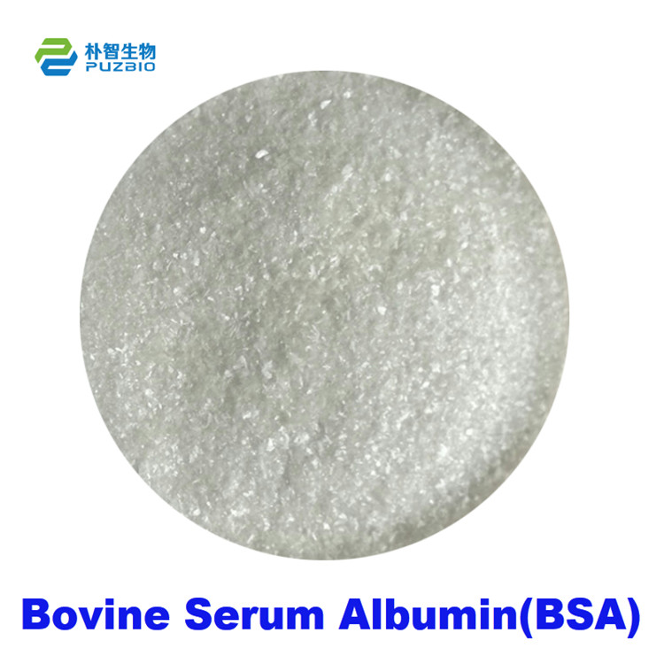 Bovine Serum Albumin