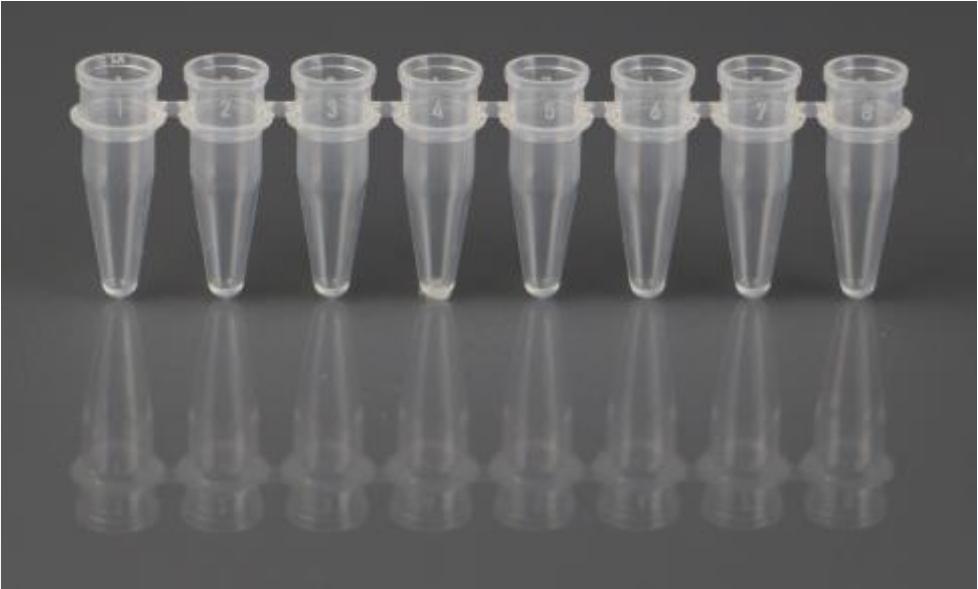 PCR管和盖