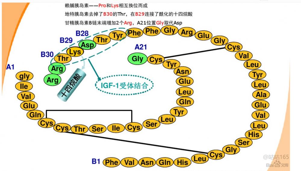 利拉鲁肽(重组)门冬胰岛素  德古胰岛素 人胰岛素  肠激酶