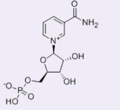 β-煙酰胺單核苷酸