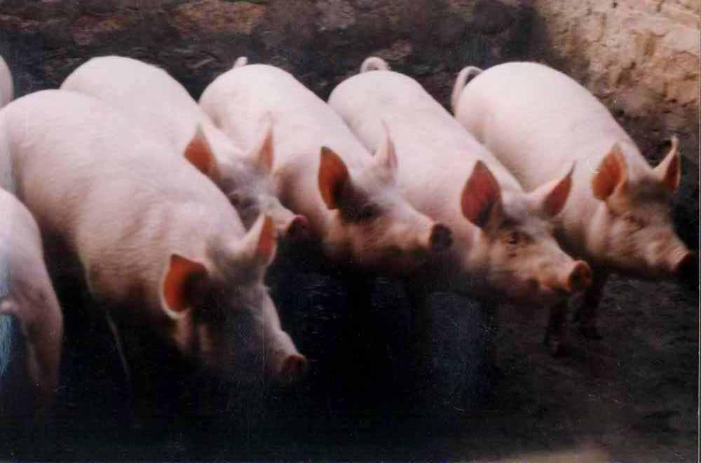 肝素钠产品图片