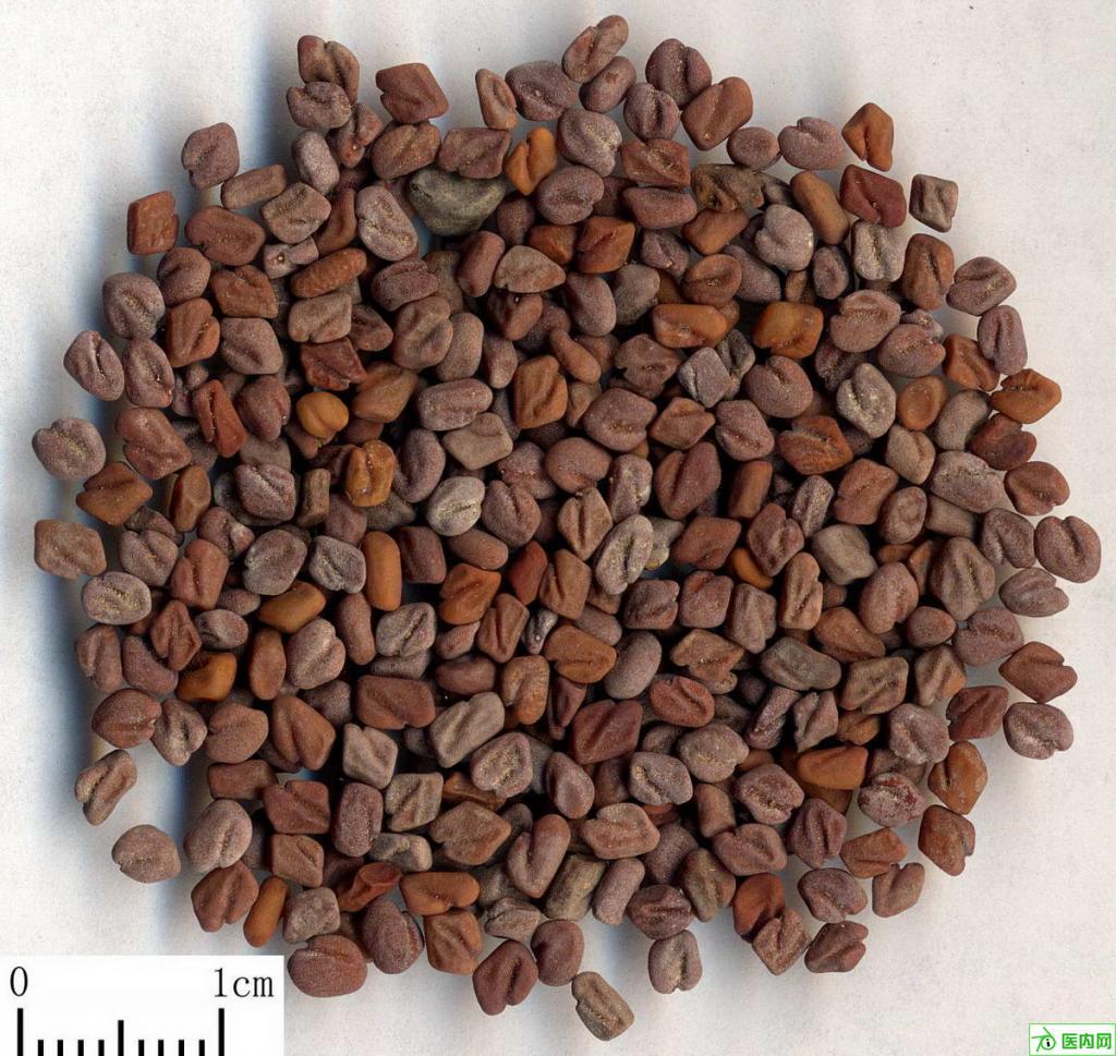 葫蘆巴Common Fenugreek Seed