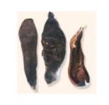 水蛭及其提取物的药理作用和应用进展