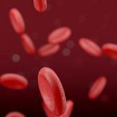 国内临床新进展 诺和诺德新一代血友病双抗治疗新药获临床试验默示许可