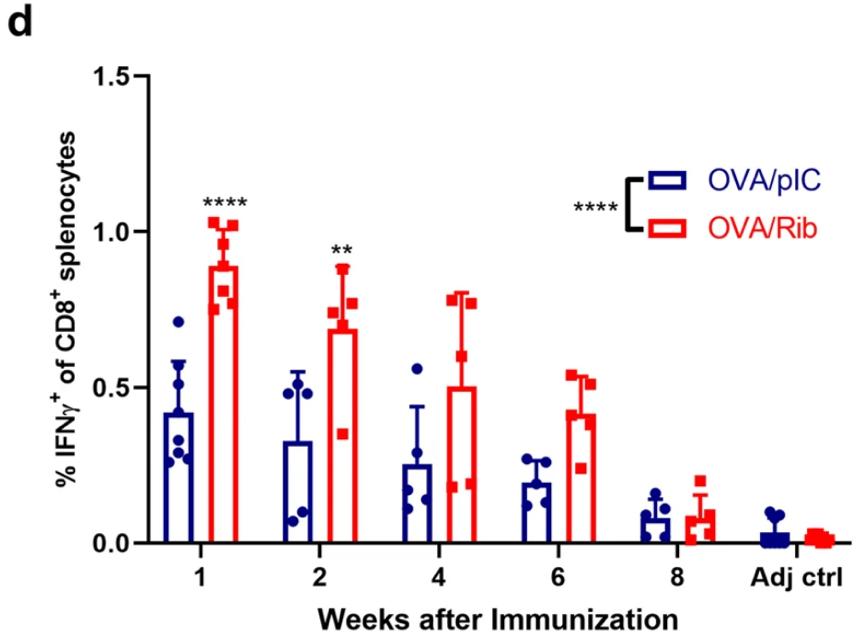 抗癌疫苗(红色)诱导的CD8+T细胞增殖持续时间(图源:参考1)