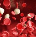 抗血小板活性肽药物的研究进展